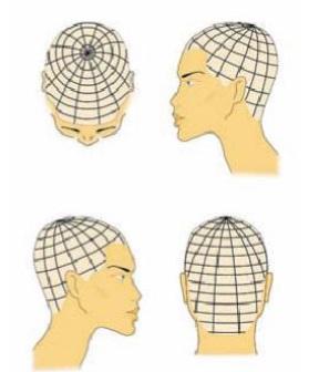 Схема колорирования волос «Центрическое лекало»